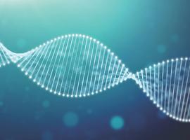 Influence du profil mutationnel sur le pronostic clinique dans le lymphome diffus à grandes cellules B
