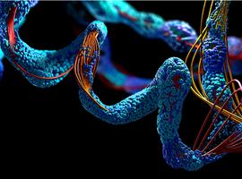 Rol van de eiwitinname bij het behoud van spiermassa, met name bij patiënten met chronische nierziekte