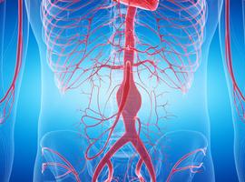 De essentie van 2020: aorta en perifere bloedvaten