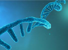 Les ARNs non codants, des biomarqueurs prometteurs pour le suivi des pathologies pulmonaires