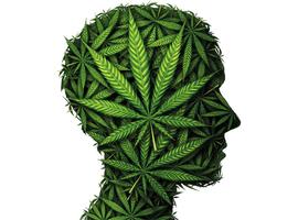 """""""De honderdjarige drugswet staat een humaan cannabisbeleid in de weg"""""""