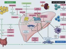 NASH/NAFLD: een aangekondigde wereldwijde epidemie…
