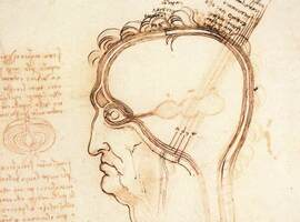 Geschiedenis: uienschillenop de schedel, omhulselsvan de ziel?