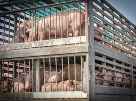 Europa waarschuwt voor import antibioticaresistent vlees
