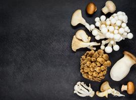 Beschermen paddenstoelen tegen neurodegeneratieve aandoeningen?