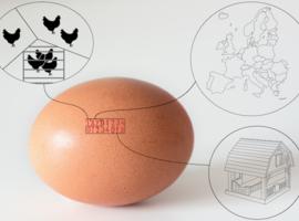 Oeufs contaminés : l'Afsca communique son numéro vert et les codes d'oeufs à ne pas consommer