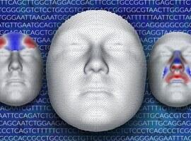 Genetische link tussen gelaatstrekken en hersenvorm geïdentificeerd