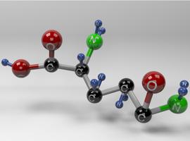 L-glutamine, multifunctioneel aminozuur