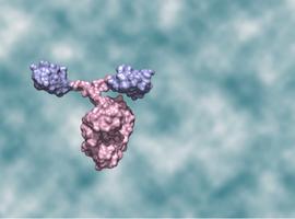 Possibilités d'application des Nanobodies dans le domaine médical
