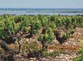 Trouvé chez un caviste (France) - Grands rouges du Roussillon: petite sélection gourmande
