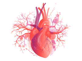 OLVZ Aalst: weldra naar 60 samenwerkende cardiospecialisten