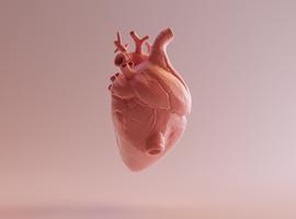 Ontstekingen aan hart moeten in bijsluiter coronavaccins (EMA)