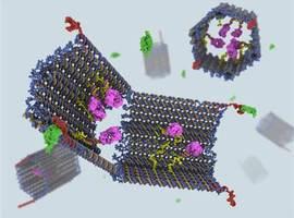 DNA-nanorobot vernietigt tumor in 48 uur