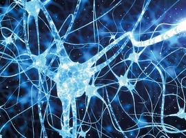 Nouveaux neurones dans le cerveau adulte: la neurogenèse adulte et son rôle dans les fonctions et les maladies du cerveau