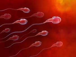 TESA ou Micro-TESE en cas de cryptozoospermie ou d'oligozoospermie sévère?