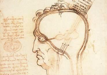 Histoire: des peluresd'oignonsur le crâne, enveloppesde l'âme?