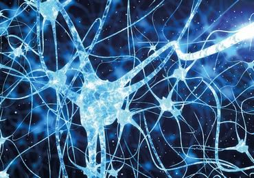 Nieuwe zenuwcellen in volwassen hersenen: adulte neurogenese en haar rol bij hersenfuncties en -ziektes